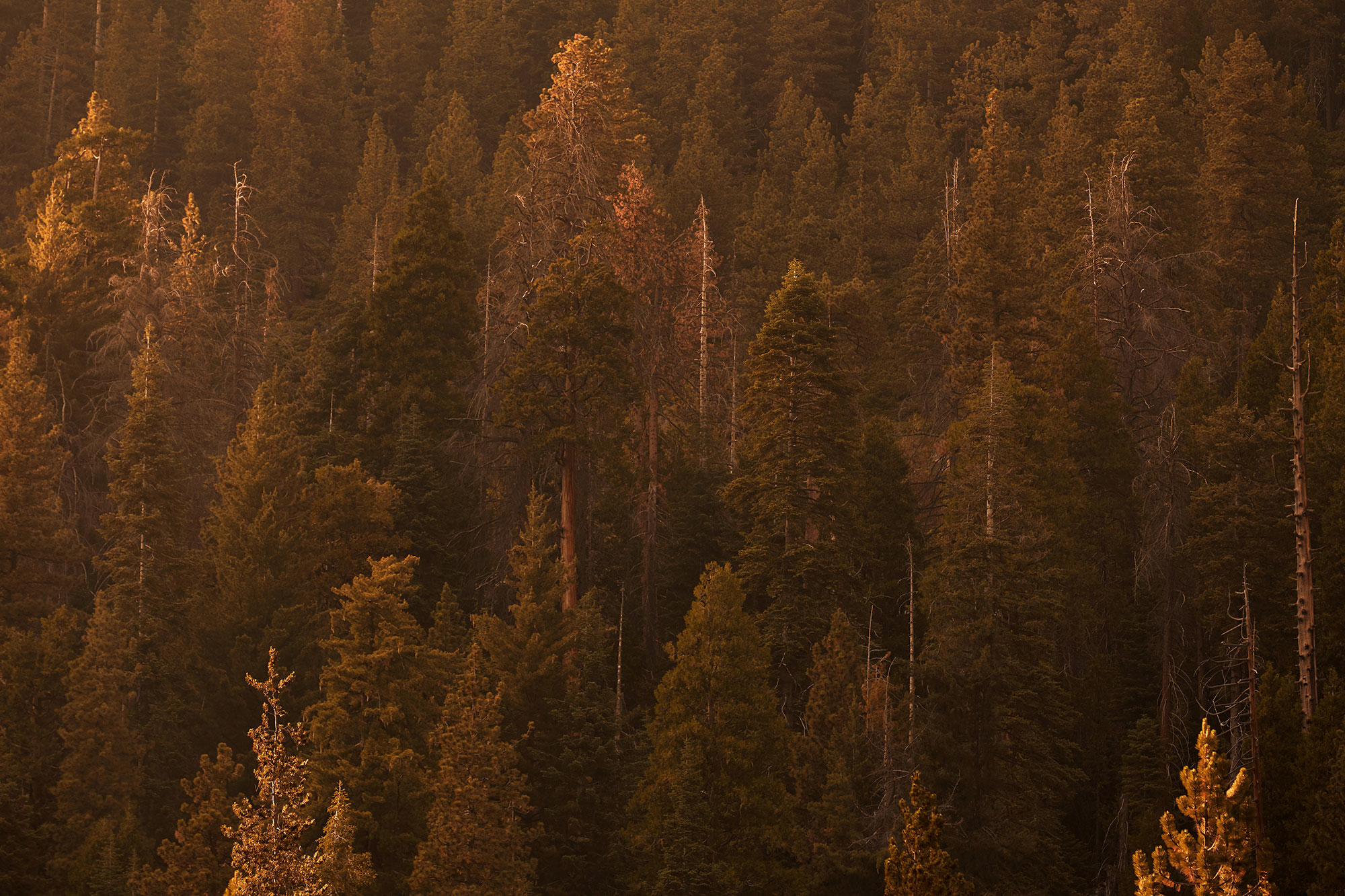 Sequoia National Park -  Stephen Denton Photography, Los Angeles, California based interior & hospitality photographer